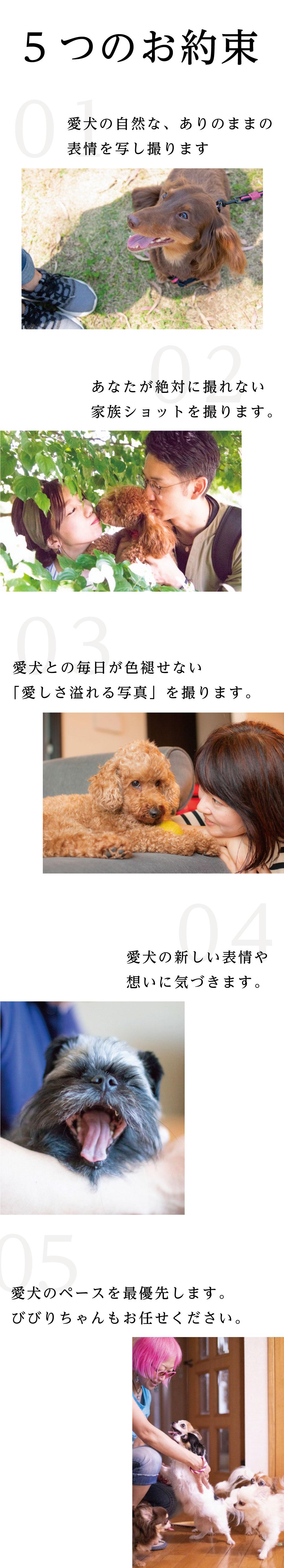 5つのお約束 01:愛犬の自然な、ありのままの表情を写し取ります 02:あなたが絶対に撮れない家族ショットを撮ります 03:愛犬との毎日が色褪せない『愛しさ溢れる写真』を撮ります 04:愛犬の新しい表情や想いに気づきます 05:愛犬のペースを最優先します。びびりちゃんもお任せください