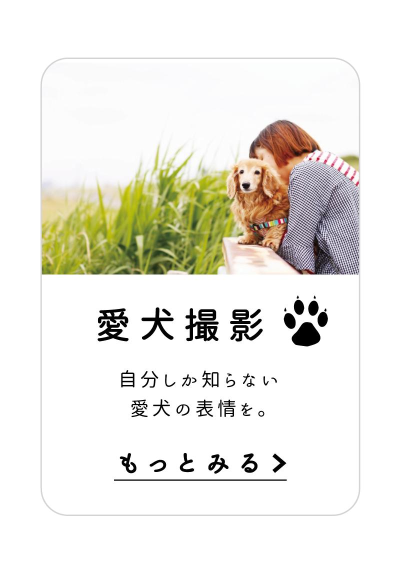 愛犬撮影 自分しか知らない愛犬の表情を