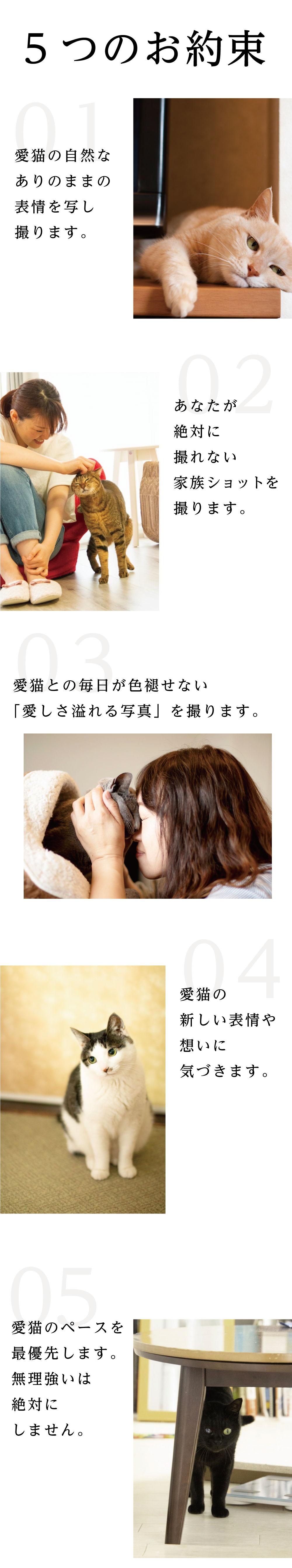 5つのお約束 01:愛猫の自然なありのままの表情を写し取ります 02:あなたが絶対に撮れない家族ショットを撮ります 03:愛猫との毎日が色褪せない『愛しさ溢れる写真』を撮ります 04:愛猫の新しい表情や想いに気づきます 05:愛猫のペースを最優先します。無理強いは絶対にしません
